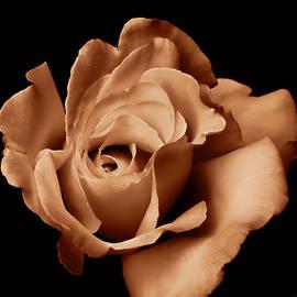 Jennie Marie Schell - The Copper Rose Flower