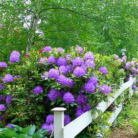 Susan Lafleur - The Cottage Fence
