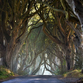 Enda McAuley - The Dark Hedges