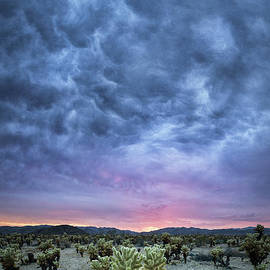 Michael Ver Sprill - The Dark Sunset at Cholla Cactus Garden