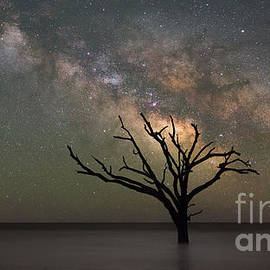 Michael Ver Sprill - The Dead Forest Milky Way