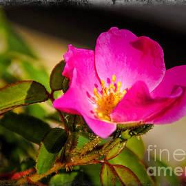 Janice Rae Pariza - The Desert Rose