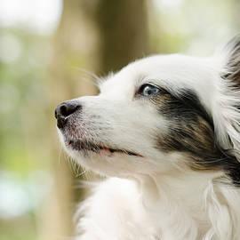 Daniel Precht - The dog