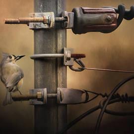 Jai Johnson - The Electrician Songbird Art