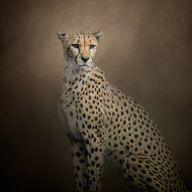 Jai Johnson - The Elegant Cheetah