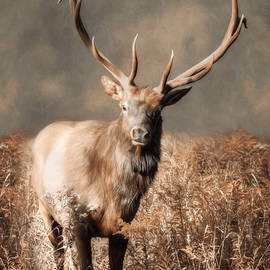 Lori Deiter - The Elk Master