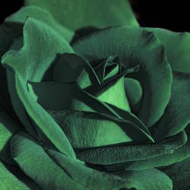 Jennie Marie Schell - The Emerald Green Rose Flower