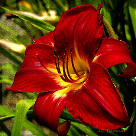 James C Thomas - The Fiery Lily