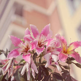 Jenny Rainbow - The Flowers of Malaga