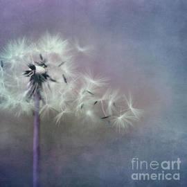 Priska Wettstein - The four winds