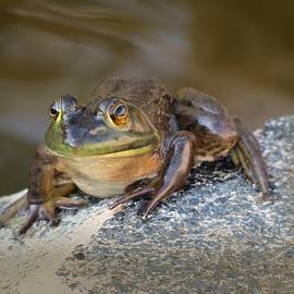 MTBobbins Photography - The Frog
