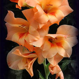 Photographic Art and Design by Dora Sofia Caputo - The Gladiola of Summer