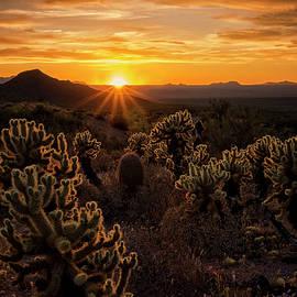 Saija Lehtonen - The Golden Desert