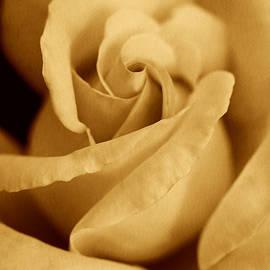 Jennie Marie Schell - The Golden Vintage Rose