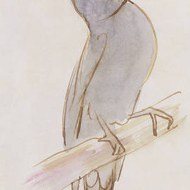 The Gray Bird - Edward Lear