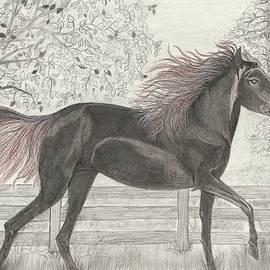 Wraymona Low - The Horse