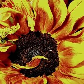 Elizabeth Tillar - The Hot Gold Head of Venus Kissed by Mars...
