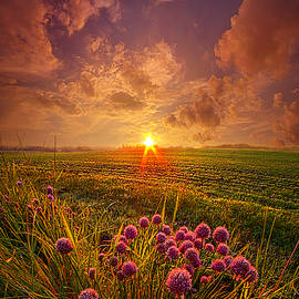 Phil Koch - The Infinite Space Between Words