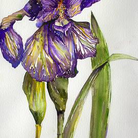 Mindy Newman - The Iris