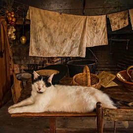 Robin-lee Vieira - The Kitchen Cat