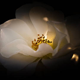 Loriental Photography - The Light of Life