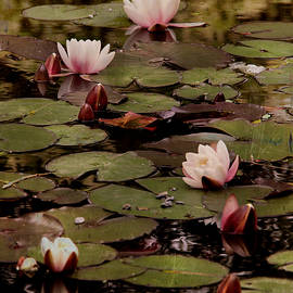 Dominic Moriarty - The lily pond.