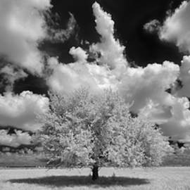 Susan Pantuso - The Lone Tree