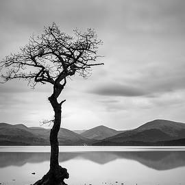 Veli Bariskan - The Lone Tree