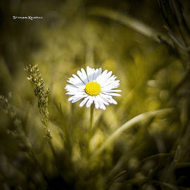 Stwayne Keubrick - The lonely daisy