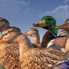 Daniel Eskridge - The Lucky Mallard