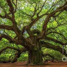 Michael Ver Sprill - The Magical Angel Oak Tree Panorama