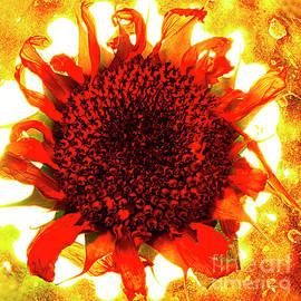 Alexander Sasha Vinogradov - Sunflower On Fire.