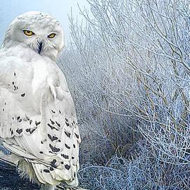 Brian Tarr - The Mystical Snowy Owl