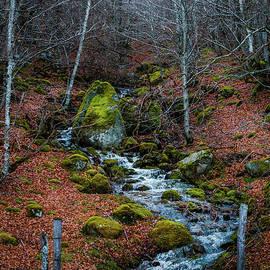 Robert Brown - The mystical wood.