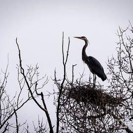 Janice Rae Pariza - The Nest Builder