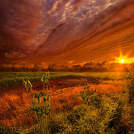 Phil Koch - The Never Ending Story