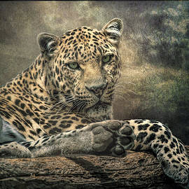 Brian Tarr - The Night of The Leopard