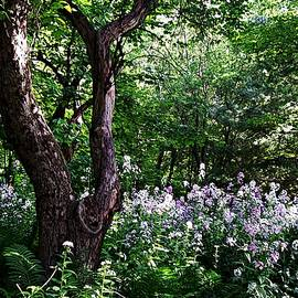 Joy Nichols - The Old Apple Tree, Fiddlehead Ferns and Wild Phlox