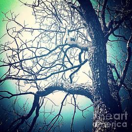 Sandra Gallegos - The Old Pecan Tree