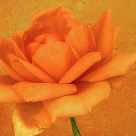 EricaMaxine  Price - The Orange Rose