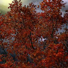 RC deWinter - The Passion of Autumn