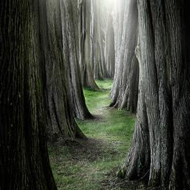 Ian David Soar - The Pathway
