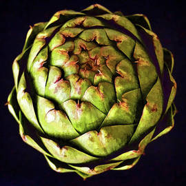 Sandi OReilly - The Patterns Of The Artichoke
