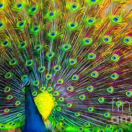 Adrian Evans - The Peacock