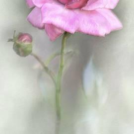 David and Carol Kelly - The Pink Rose