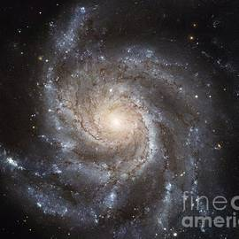 R Muirhead Art - The Pinwheel Galaxy Hubbles Largest Galaxy Portrait Offers a New High Definition Vi