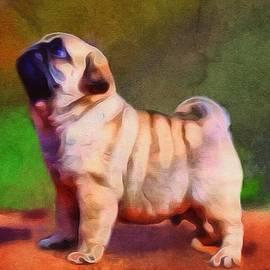 Scott Wallace - The Pug Portrait