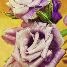 Sandi OReilly - The Purple Rose