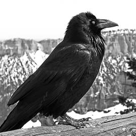 Rona Black - The Raven - Black and White