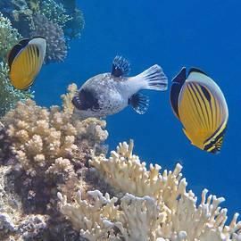 The Red Sea Underwater World